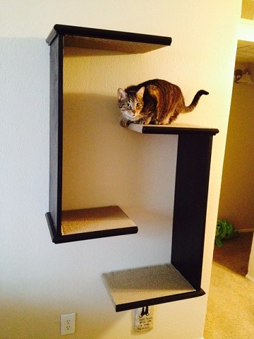 Even a few basic shelves finished in carpet or sisal will give your cat a fun place to nap, in much less space than you'd need for a traditional cat tree (by Charles Gable Designs)