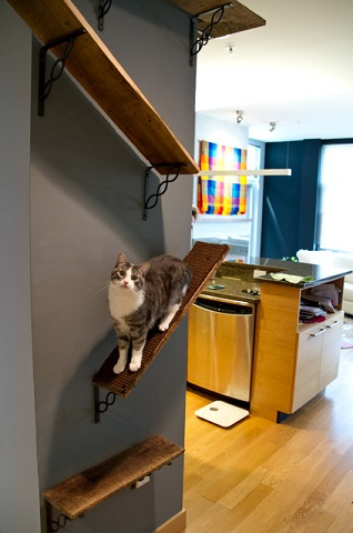 Simple stacked shelves allow your cat to climb up high and enjoy your home from their favorite vantage point (by DC Interiors and Renovations)