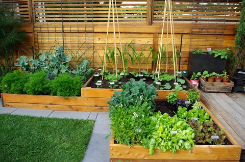 This year, consider replacing some (or all!) of your lawn with fruit and vegetable planters (by Aloe Designs)