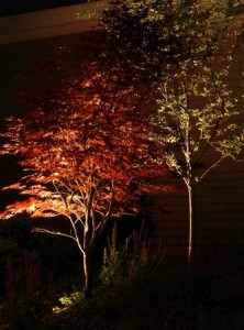 Single Up Lights Can Be Used To Spotlight Individual Plants Or Garden Features