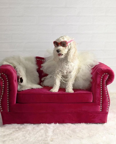 Yorkshire Pink Pet Bed CDF-P2038-H from Contemporary Design Furniture